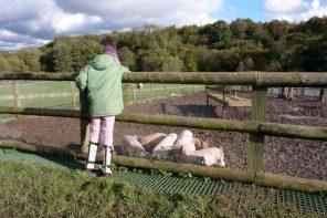 Feeding the piglets at Jimmy's Farm