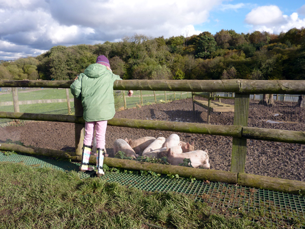 Feeding the piglets at Jimmy's Farm - Things to Do in Suffolk