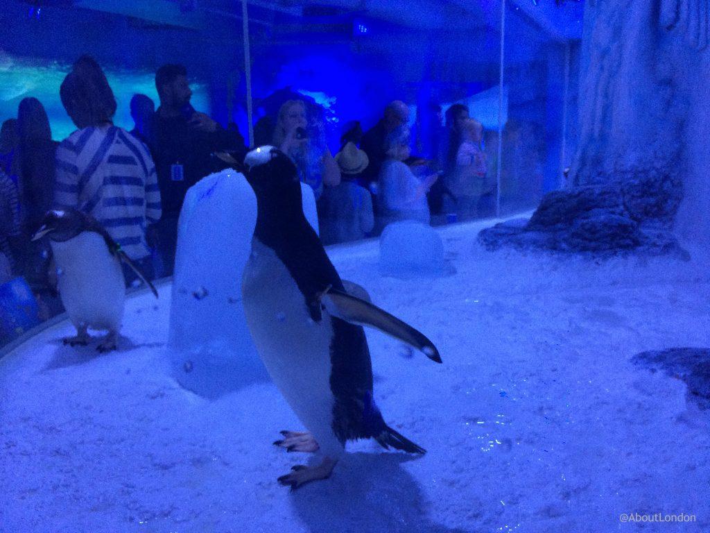 Penguin Point London Aquarium