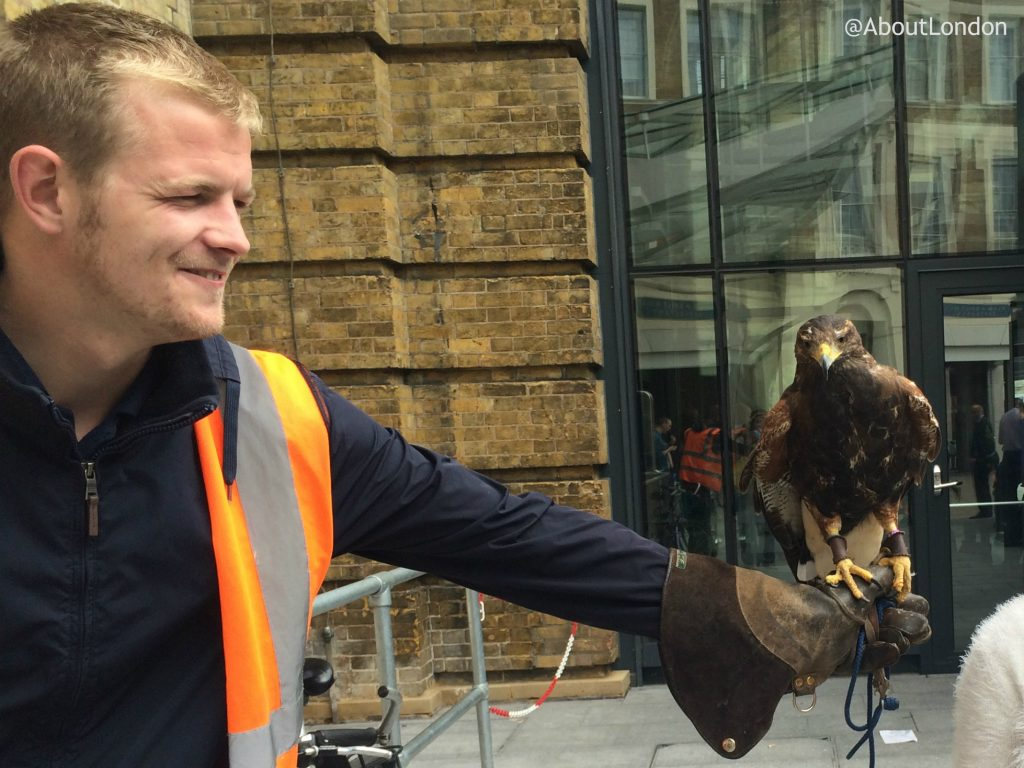 Hawk at King's Cross