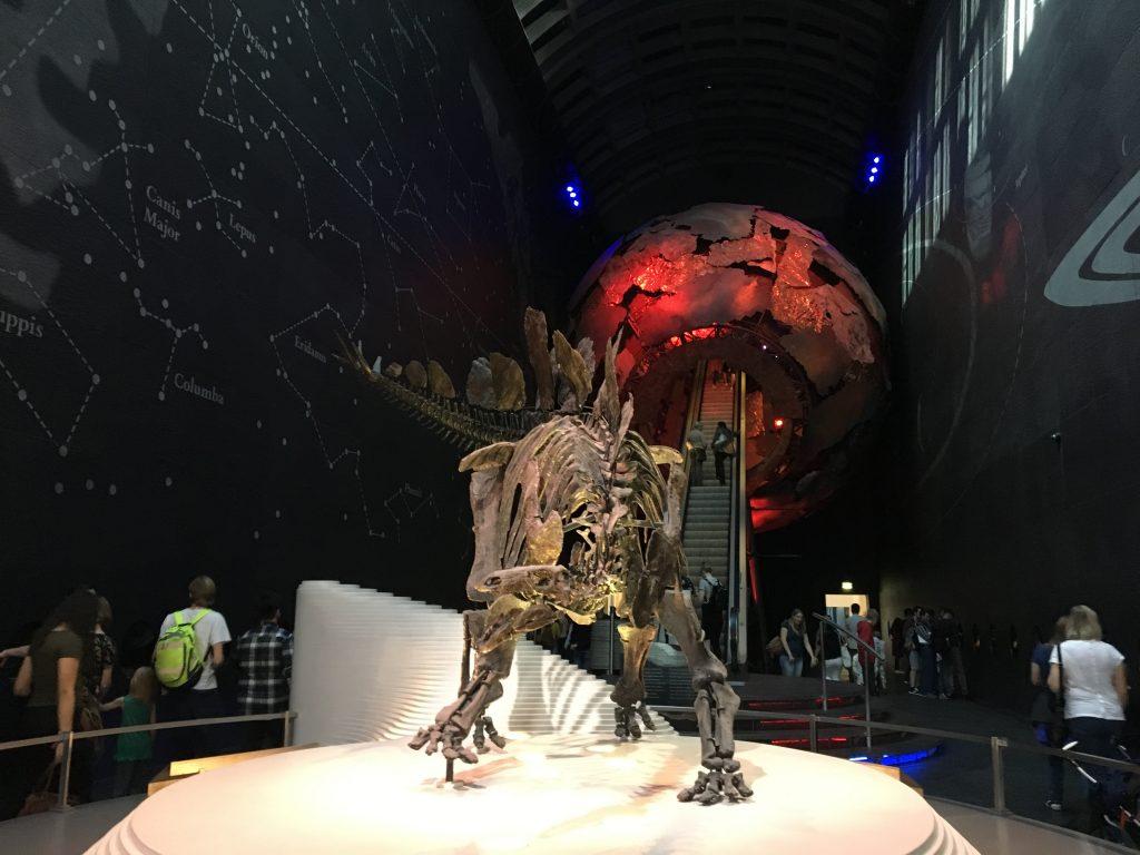 Breadcrumbs Natural History Museum - stegosaurus